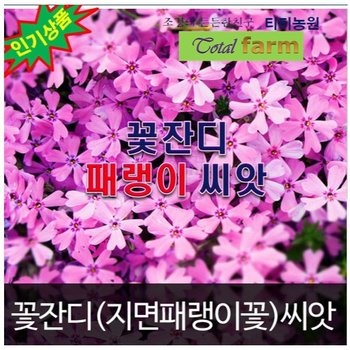 [패랭이꽃꽃잔디 씨앗 지면패랭이씨앗 300알]